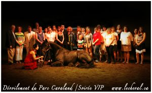 Cavaland - photo cheval