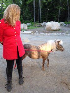 Cavaland - poney